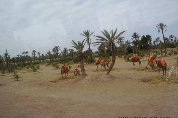 marrakech-maravella-2010-522952C48B-E1A5-790E-A18E-72A643B7ED0B.jpg