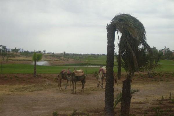 marrakech-maravella-2010-53CFA7E57D-AA90-DE49-3219-93153442E08E.jpg