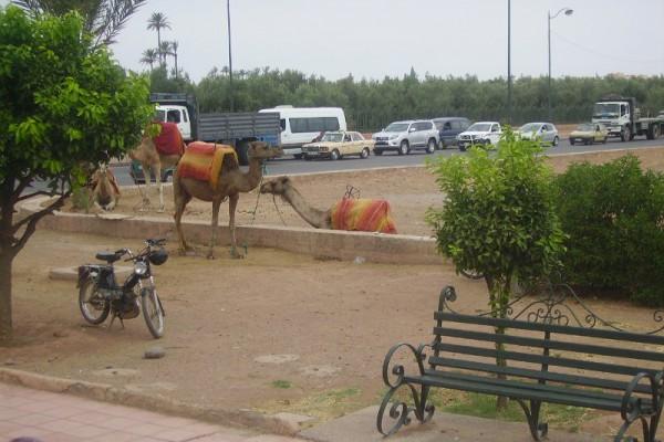 marrakech-maravella-2010-57B38FCE08-0D11-6A10-AC6D-EB4D5BF90353.jpg